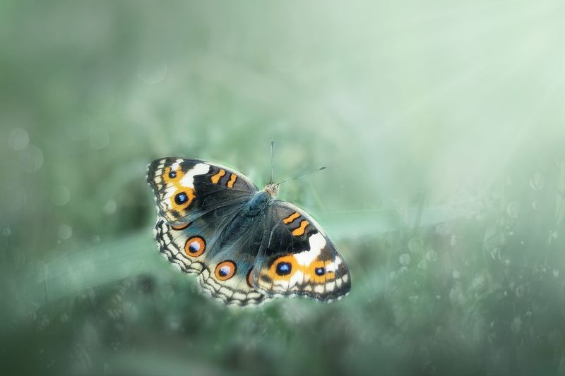 One Animal Animal Wildlife Animals In The Wild Animal Butterfly - Insect Animal Themes No People Nature Insect Animal Markings Day Outdoors Close-up Beauty In Nature