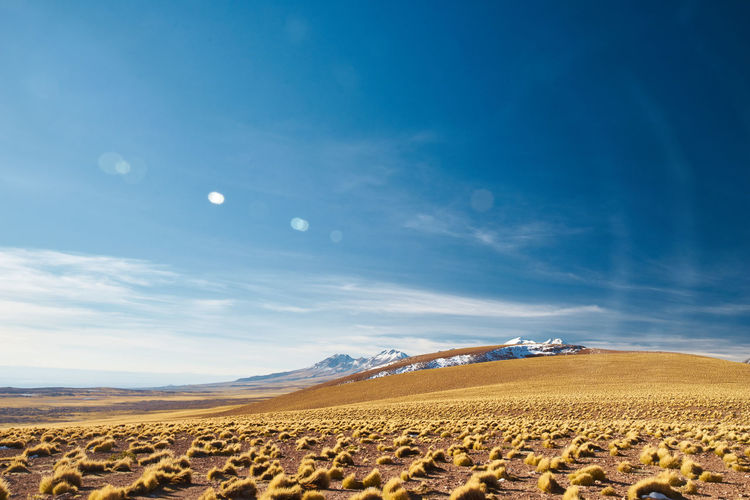 that view Golden Grass Nature Landscape Travel Photography Blue Sky Chile Rural Scene Agriculture Blue Field Stack Flower Backgrounds Cereal Plant Summer Sky Bale