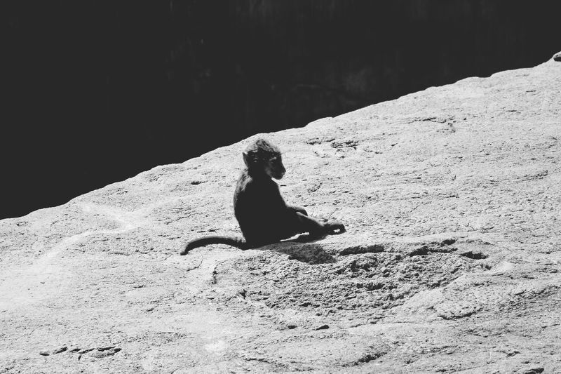 Sometimes we need to be alone and think! Monochrome Monkey Business Baby Tail Thinking Alone Monkey Blackandwhite Sunlight Nature Day Animals In The Wild One Animal Animal Themes Animal Wildlife Rock Animal Solid Rock - Object One Person Shadow Sitting Sunny Vertebrate Real People Outdoors Sand