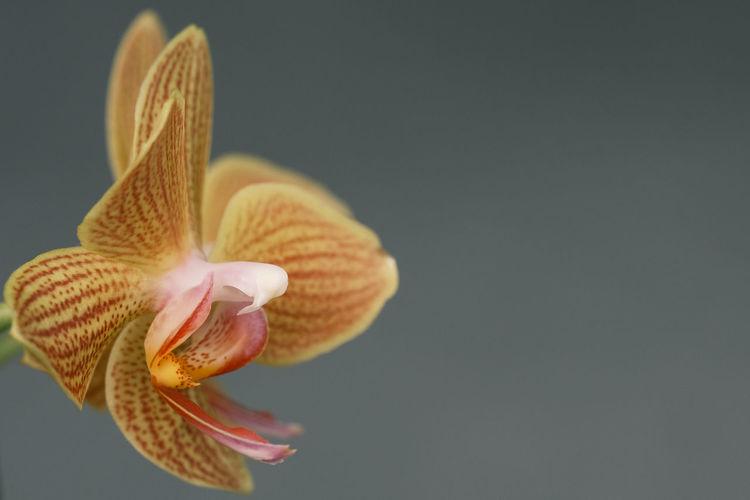 Close-up of flower against black background