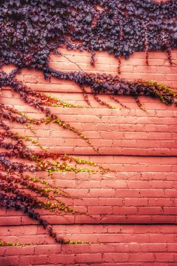 Fall Colors Textured Wall Linear Pattern Room For Text Text Space Autumn Fall Season Creeping Vines Nikon Backgrounds Full Frame No People Textured  Pattern Day Capture Tomorrow Wall - Building Feature Weathered Outdoors Nature Wall Architecture Red Damaged Growth Sunlight Built Structure