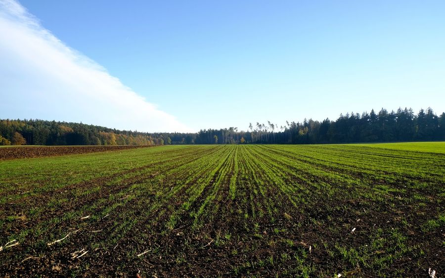 Landscape Land Field Agriculture Environment Rural Scene Green Color No People Plantation Outdoors