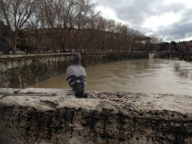 piccione sul tevere Roma Adapted To The City The City Light Moving Around Rome Stories From The City Adventures In The City #urbanana: The Urban Playground