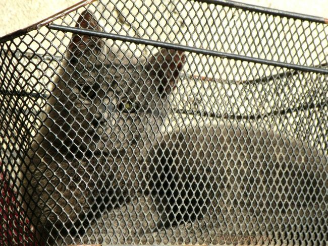 Cat Grey Cat Chainlink Fence Safety Metal Protection Day Pattern No People Nature Outdoors