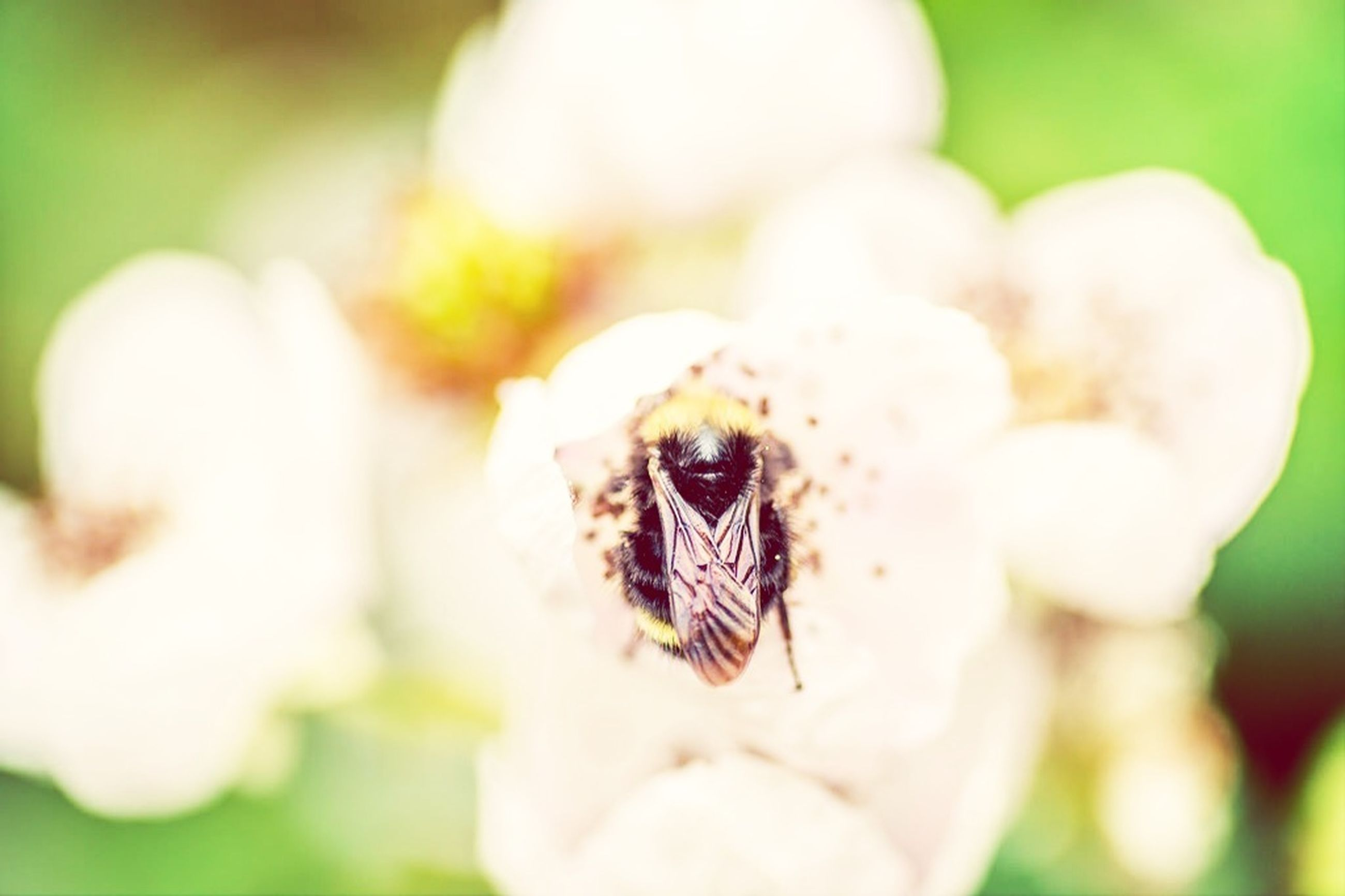 close-up, insect, flower, focus on foreground, one animal, animal themes, fragility, freshness, white color, selective focus, nature, wildlife, animals in the wild, growth, beauty in nature, petal, flower head, day, single flower, outdoors