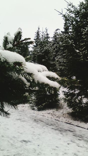 Walking Around Winter Wintertime Snow снег Nature парк снег на ветке