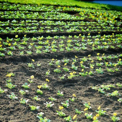 EyeEm Nature Lover Flowerporn Flower Flowers,Plants & Garden Flower Collection Nature_collection 花と庭 Nature