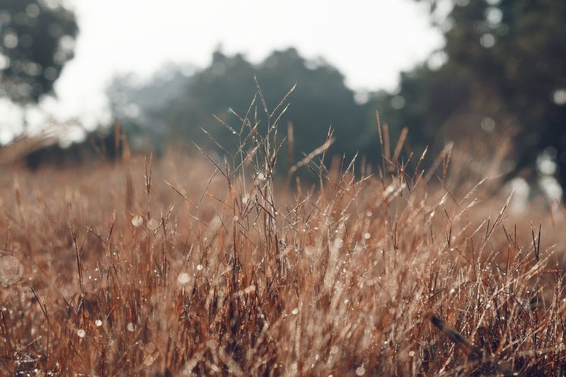 Nature Growth No People Tree Grass Outdoors Close-up Beauty In Nature Winter Day Sunshine Sunny Lights Trough Grasses Nature Photography Nature_collection Skylover Natural Beauty Tranquility Beauty Time Outedoor Leaf Tree Nature Naturephotography