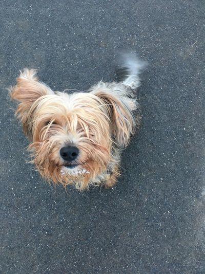 Dog Mammal