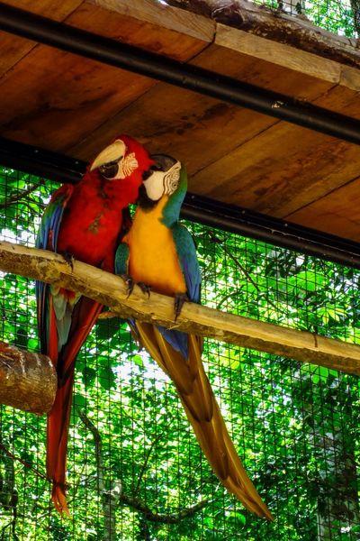 EyeEm Nature Lover Nature Photography FozDoIguaçu Parquedasaves Nature Brazil Bird Photography Birdspark Macaws