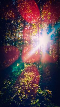 """ Fairy Flare "" -this turned out better than I thought there isn't added on Len flare all natural! Lens Flare Hiking Colorful Landscape Sunbeam Sunlight Multi Colored Nature Environment Vibrant Color Outdoors No People Tree Scenics Day Beauty In Nature Forest Autumn"