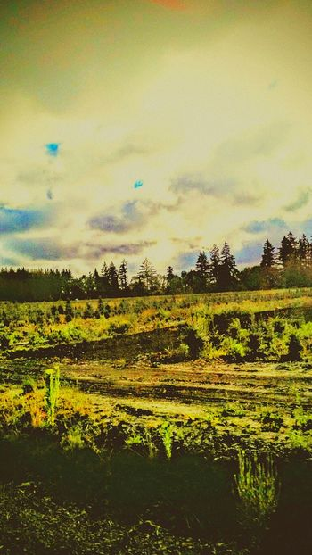 Weirdography Wicked Awesome Oregonexplored Yamhill County Willamette Valley
