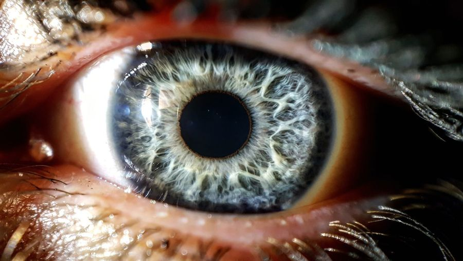 Full frame shot of human eye