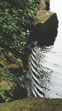 St. Stephens Green Dublin Duck Pond Overlookingthebridge