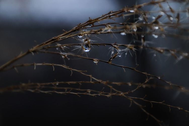 Close-up of spider web on twig