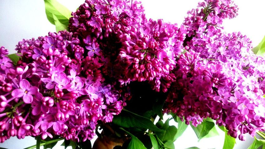Flower Growth Purple Fragility Freshness Nature Beauty In Nature