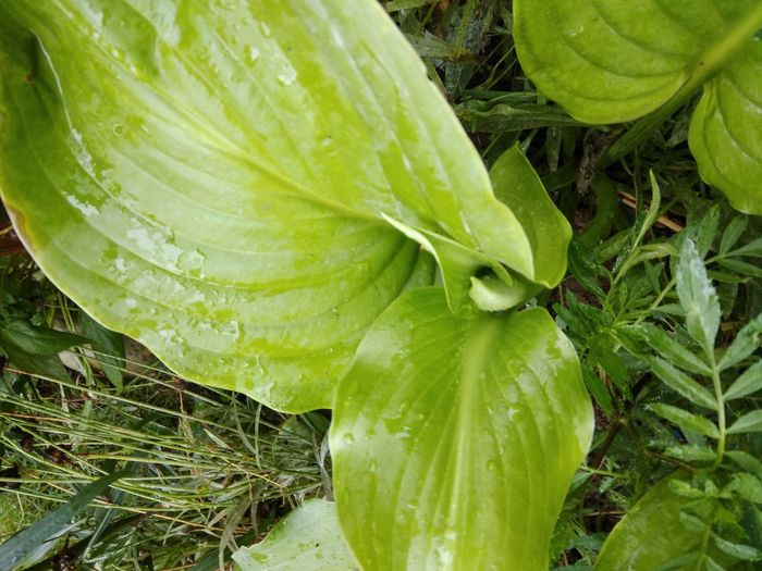 Water droplets . Kashmir Beauty Kashmir Is Heaven Green Color Close-up Outdoors Freshness No People Water Drops On Leaves
