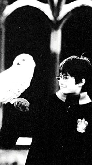⚡👓 Harry Potter The Boy Who Lived Hedwig Little Harry Blackandwhite Best Movie Ever