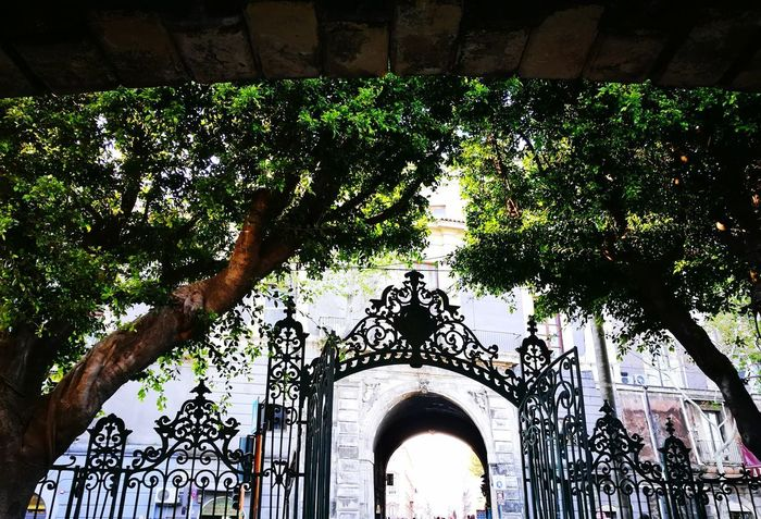 The Secret Spaces Arch Low Angle View Architecture Built Structure Tree No People Cataniaisdifferent Italy🇮🇹 Cataniatiriempieilcuore Catania Catania Sicily Catania, Sicily