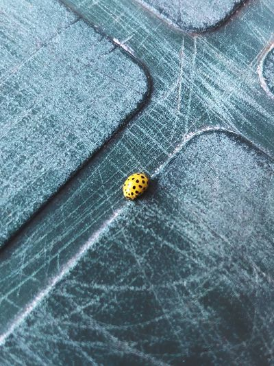 High angle view of ladybug on metal