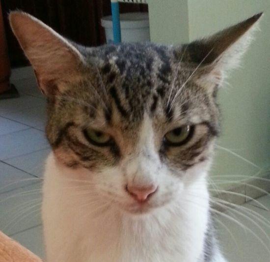 Cats jajajajaja wtf?