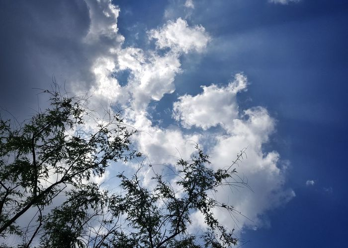trees clouds