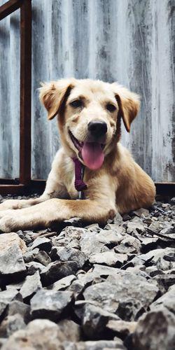 Puppy❤ Puppy