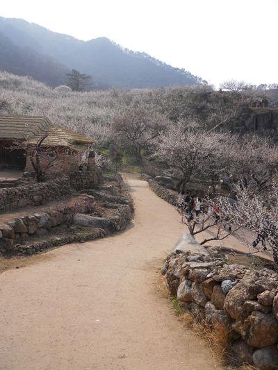 Gwangyang, Korea Korean Countryside Road Mountain Nature Spring Stonewall Tree