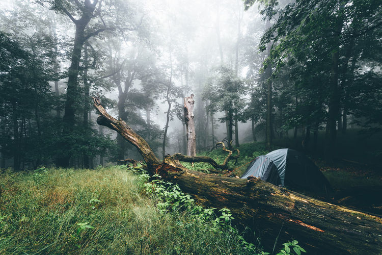 Fallen tree in forest during foggy weather