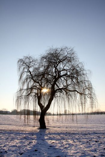 Silhouette bare tree against calm river