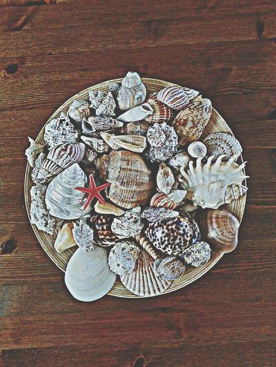 Seashells Denizkabukları