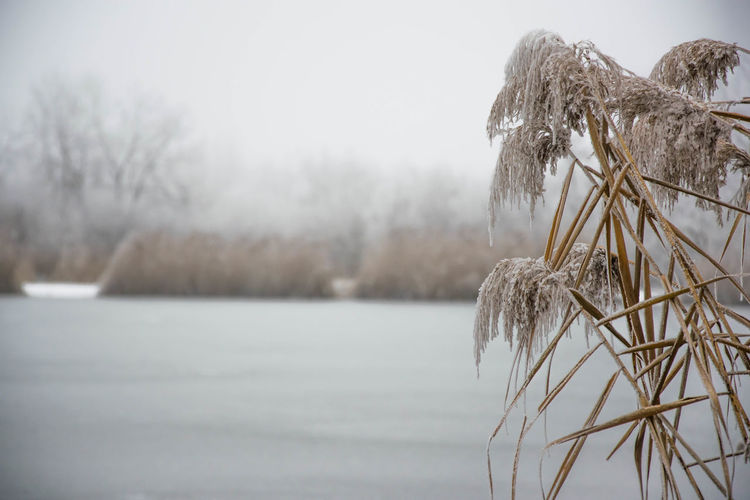 Beauty In Nature Cold Cold Temperature Day Frozen Lake Landscape Nature Nature No People Reed Reeds Schilf Sky Snow Tree Tree Trees Water Weather Winter Winter