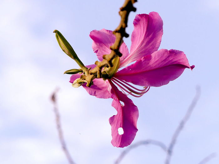 Hanging in the Sky Hanging In The Wind Suspension Beauty In Nature Blooming Blossom Branch Close-up Day Flower Flower Head Fragility Freshness Growth Hanging In The Sky Hanging In The Sun Hanging In There Nature No People Outdoors Petal Pink Color Pollen Sky Springtime Stamen Tree Twig