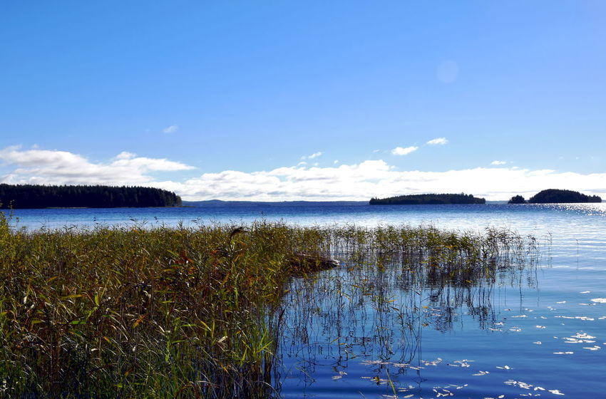 Lake Saimaa in Finland. Finland Summertime Beauty In Nature Blue Clear Water Cloud - Sky Day Grass Lake Lake Saimaa Lake View Landscape Nature No People Outdoors Reflection Saimaa Scenics Sky Summer Sunshine Tranquil Scene Tranquility Water ıslands