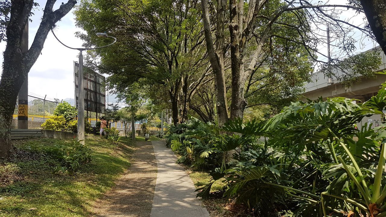 EMPTY FOOTPATH AMIDST TREES IN CITY