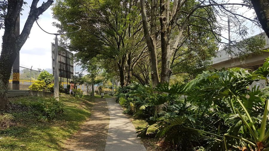 Footpath amidst trees and plants in city
