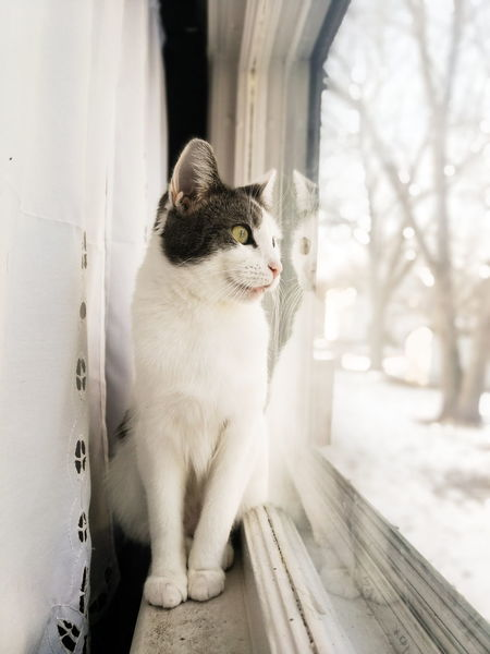 Cats Cat Reflection Reflecting Looking Out Of The Window Looking Out Quiet Moments Quiet One Animal Pets Domestic Cat Animal Animal Themes No People Feline Domestic Animals Mammal Portrait Close-up Day Visual Creativity Focus On The Story A New Beginning