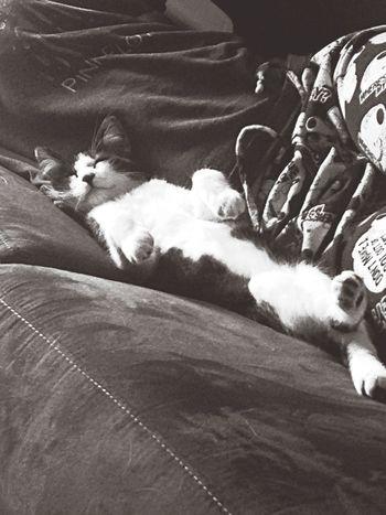 little kitty kat!