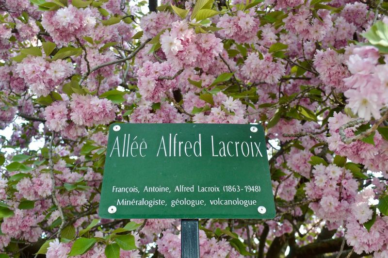 Flower power Outdoors Flower Flower Head Flowering Plant Text Plant Communication Springtime Pink Color Beauty In Nature No People Western Script Blossom Nature Freshness Close-up Cherry Blossom Tree Sign Day Growth Fragility Cherry Tree Message Lilac Wildlife Wild Nature Nature_collection Street Garden Jardin Des Plantes  Paris Streetsign View From Below Low Angle View