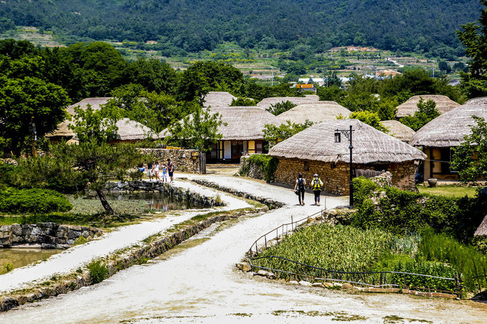 Agriculture Day Exploring Farm Forest Grass Green Green Color High Angle View Landscape Leading Lush Foliage Narrow Old Town Old Village Outdoors Remote Rural Landscape Rural Scene Suncheon Thatched House The Way Forward Tranquil Scene Tree Village