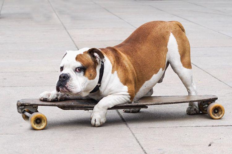 One Animal Animal Themes Mammal Canine Dog Animal Pets #FREIHEITBERLIN The Street Photographer - 2018 EyeEm Awards