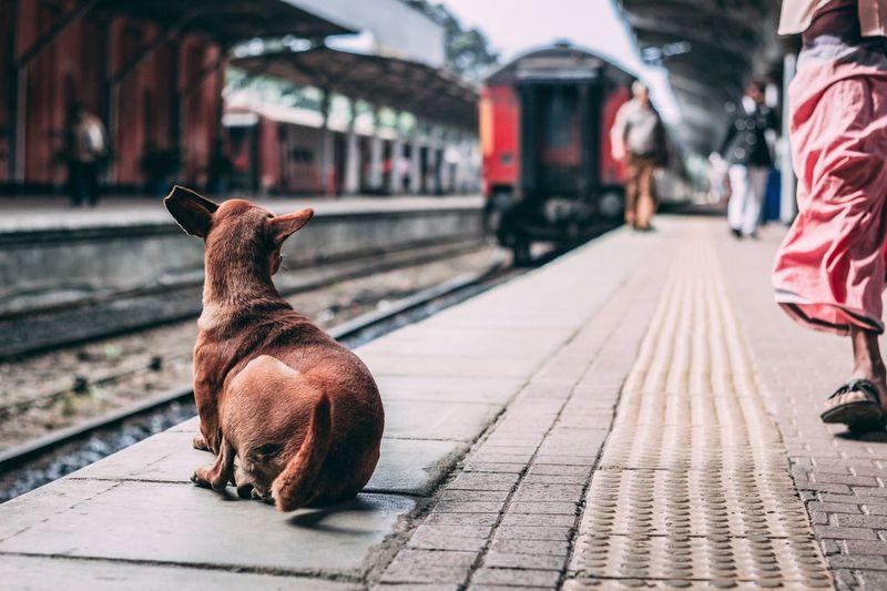 Dog at railroad station platform