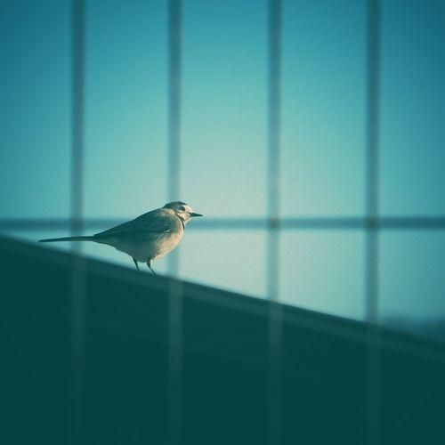 Libre!!. Cor