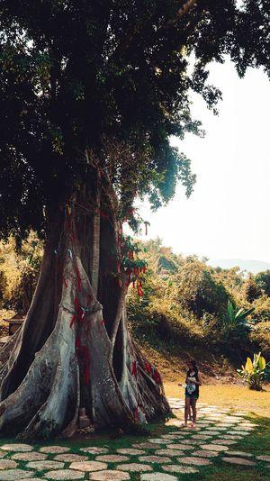 дерево желаний Вьетнам