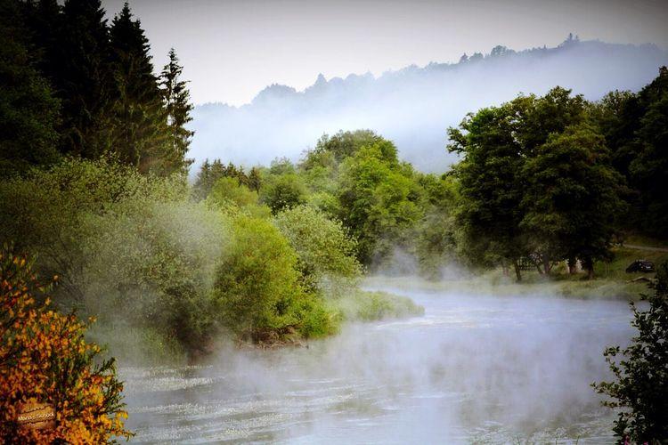 Mist Misty Morning Summer Views Summer EyeEm EyeEm Nature Lover Nature Summertime Summer2015 Summer ☀