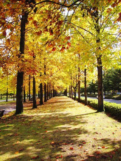 紅葉 Autumn