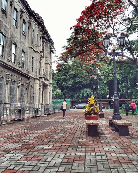 He offered her the world. She said she had her own. Flower Outdoors Tree Day Adult City Full Length Statue People Nature One Person Philippines University Of Santo Tomas Sky Only Men