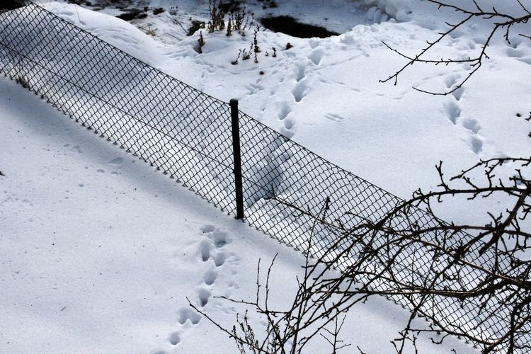 Cold Temperature Day Fence Nature No People Outdoors Snow Tracks In The Snow Weather White Color Winter