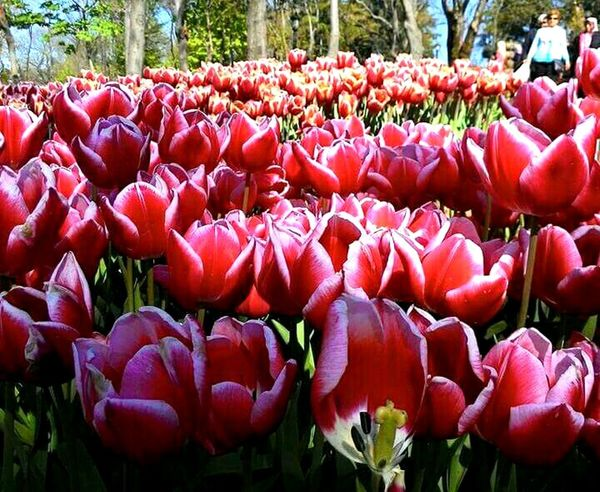 Turkey💕 Emirgankorusu Emirgan Park Flowerpark Travelphotography Flower Collection