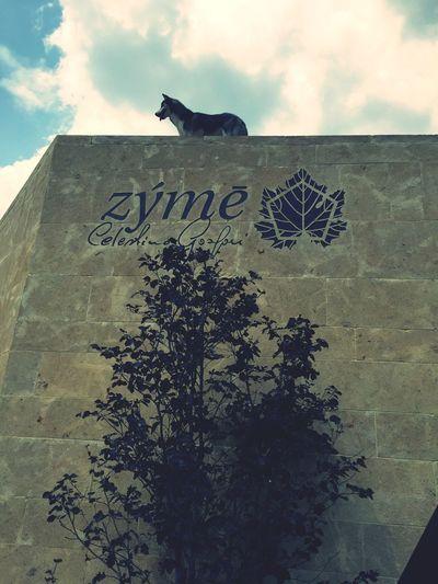 Amazing Wine Amazing Dog Amazing Architecture